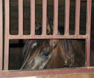 horseinstall AH