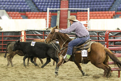 2013 Open Team Penning • Photo Courtesy of North American International Livestock Exposition