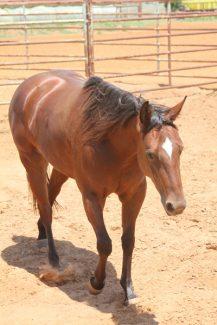 HorseInPen2 KPweb