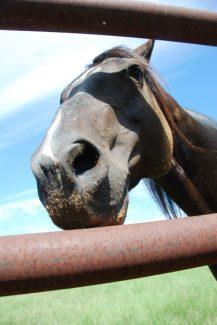 horseheadweb