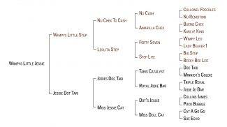 Wimpys Little Jessie pedigree