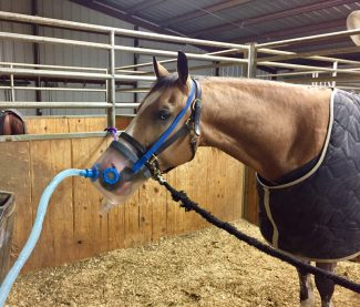 Lyme Disease: A Pinpoint Diagnosis - Quarter Horse News