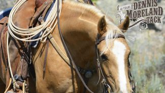 breast collar on horse