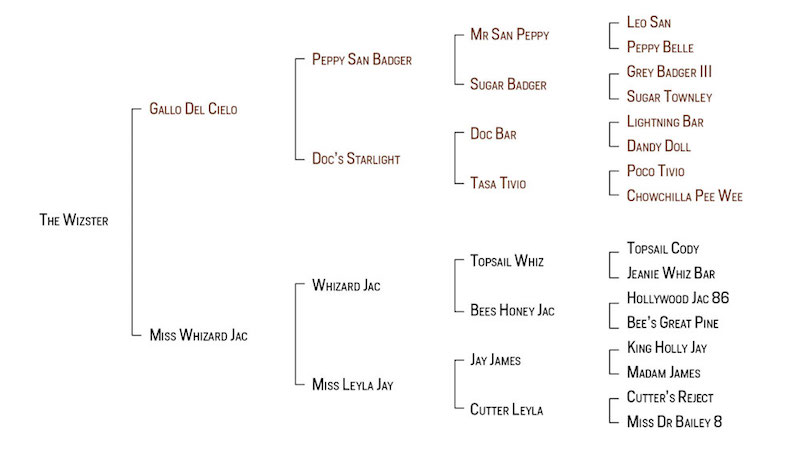 Pedigree Chart for The Wizster