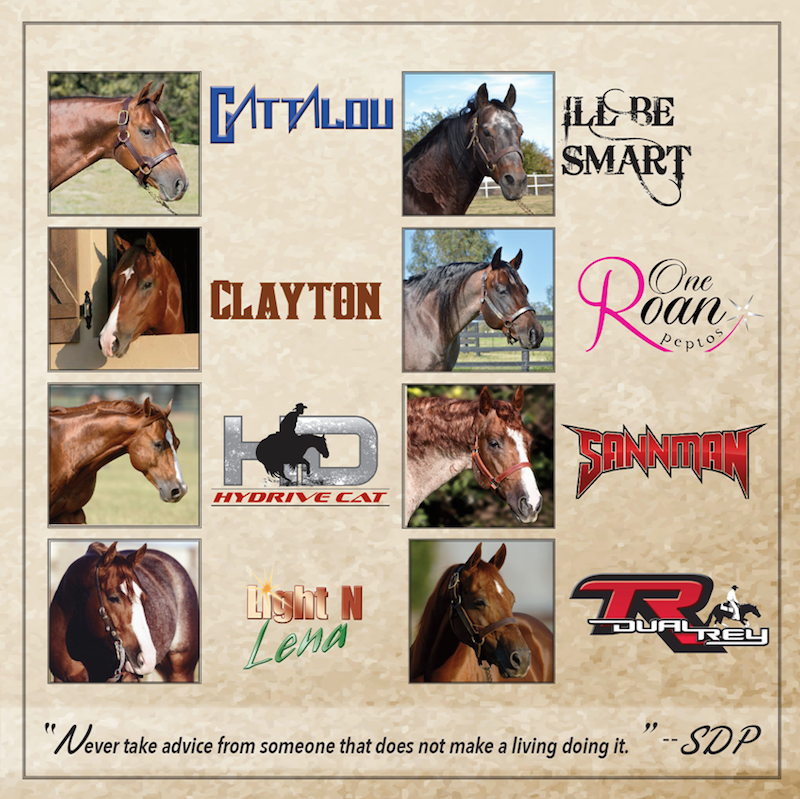 2016 SDP Buffalo Ranch Stallion Roster