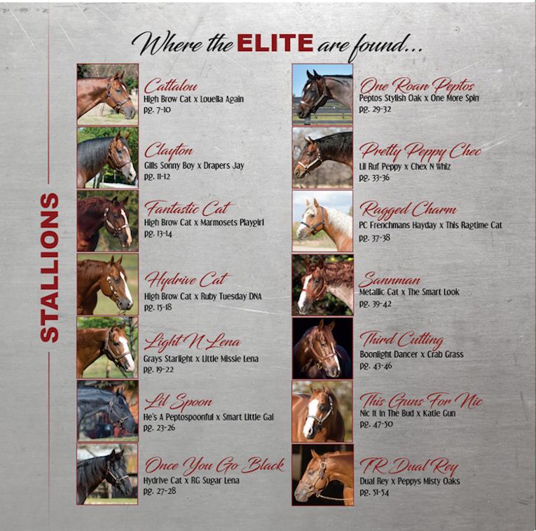 2017 SDP Buffalo Ranch Stallion Roster