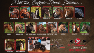 SDP Buffalo Ranch stallion roster