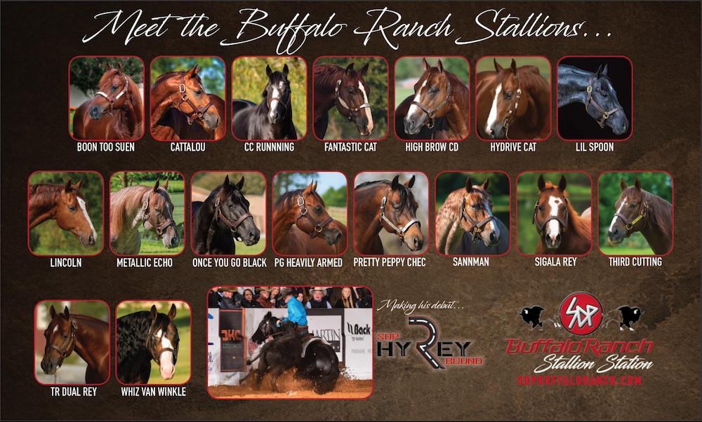 Buffalo Ranch Stallion Roster