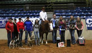 horse rider win