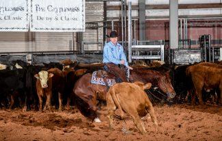 horse rider cow