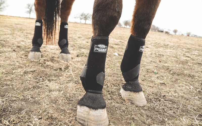 equine orthopedic support boots