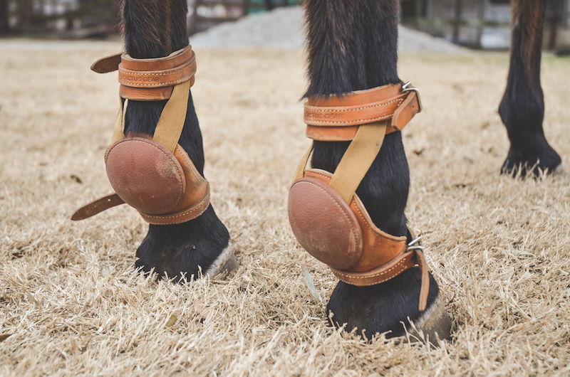 skid boots on a reining horse for leg protection