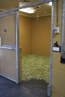 horse stall filled with green shavings