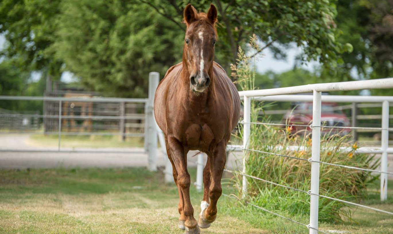 Highbrow Supercat Laid To Rest Quarter Horse News