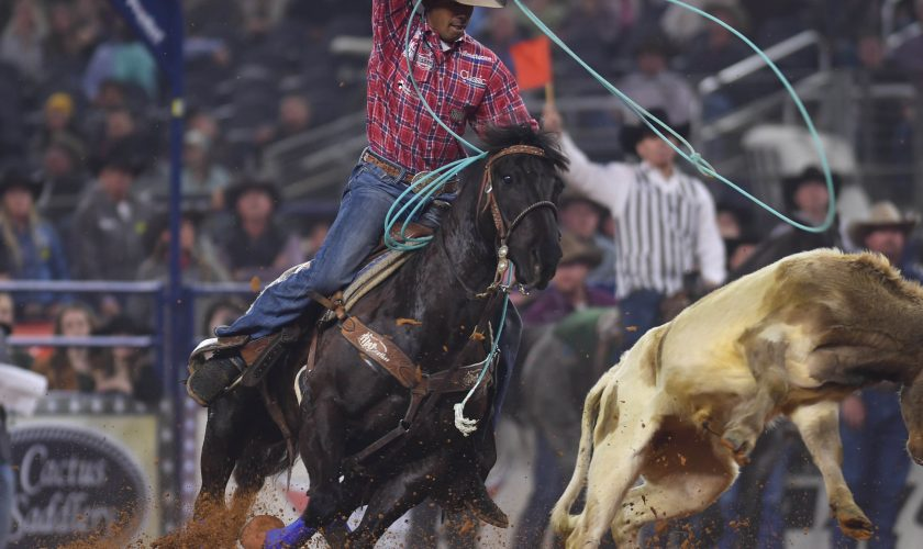 rodeo-new-york-contestant-junior-nogueira-roping-a-cow