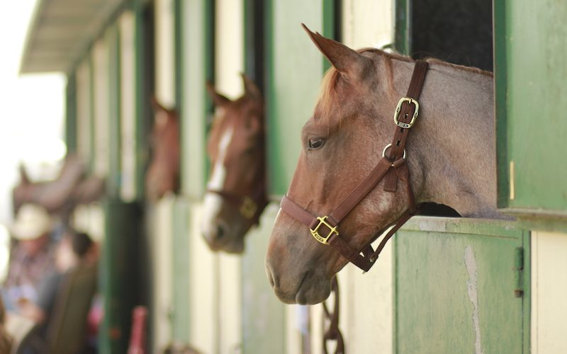 horses with heads hanging over stalls