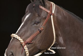 fiador on a horse's hackamore
