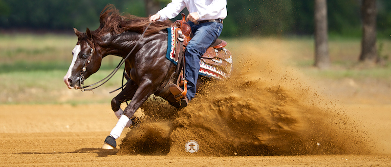 reining horse stopping