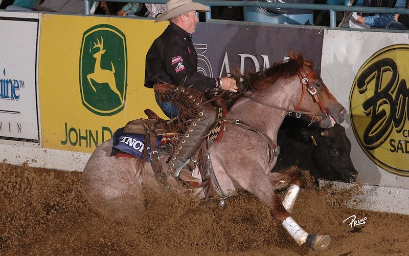 Blind Sided, a 2019 Freshman Reined Cow horse sire, going down the fence