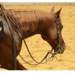 NCHA Special Committee
