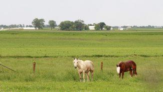 AHC workforce survey seeks input on horse industry labor needs