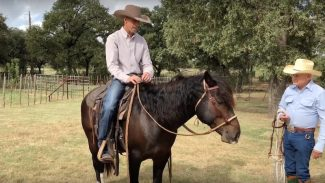 nate eicher demonstrating how to operate a grass hackamore with reins