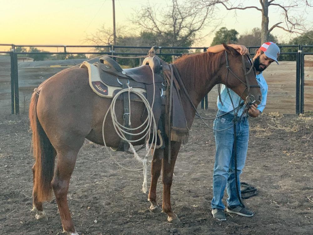 Frank Sigala putting headstall on filly