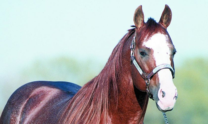 Smart Chic Olena, used at the time of reaching Seven Million Sire status