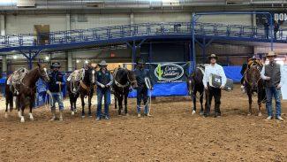 Clovis horse sale