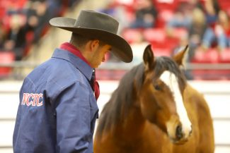 North Central Texas College horseman works with a horse.