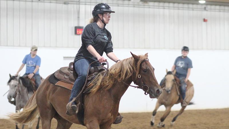 UWRF-Colt-Sale-Horse