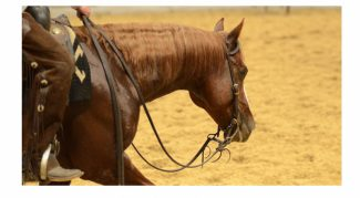 AQHA Youth World Cup cutting