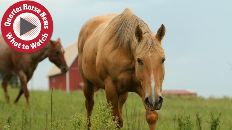 Documentary-film-horses