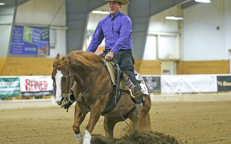 internet-auction-sale-horse-splashin-in-the-wave