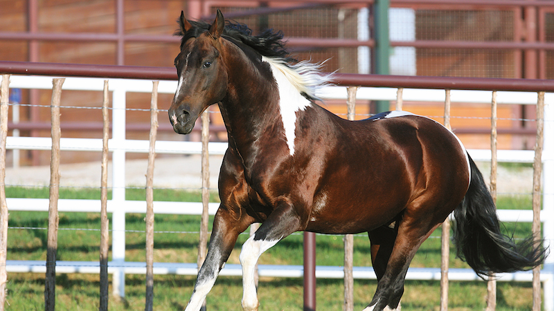 color-me-smart-paint-horse