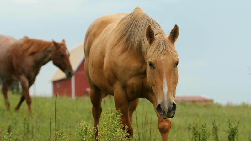 horse walking through grass