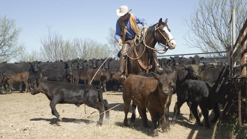 ranch-roping
