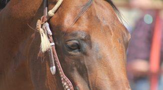 bay-horse