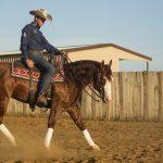 bud-lyon-reining-horse
