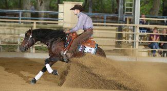 austrian-reining-futurity-horse