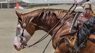 reining-horse