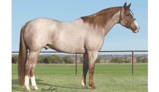 junior-reined-cow-horse-sire-bet-hesa-cat