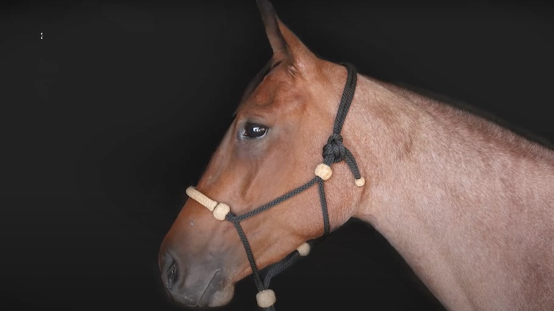knot on horse halter