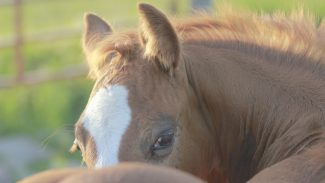 horse-looking-at-camera