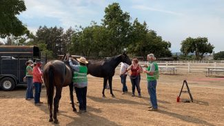 horse-shelter-california-wildfires