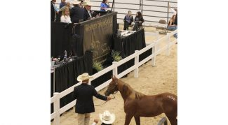 mid-year-cutting-horse-sale-rebelin-hot