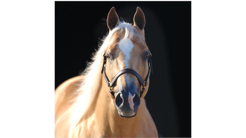 tulsa-reining-classic-stallion-shining-spark