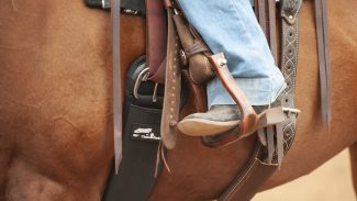 aura cinch fitting on a horse