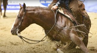 bridling your horse ensures effective communication in the show pen