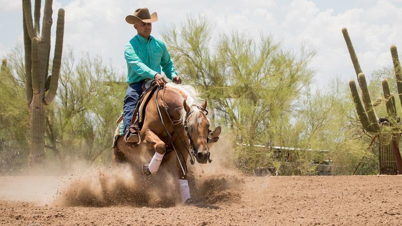 matt-mills-horse-training